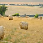 The Cornfield by Anthony Hedger Photography