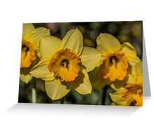 Bright Yellow Daffodil Flowers Greeting Card