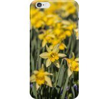 Field of Daffodil Flowers iPhone Case/Skin