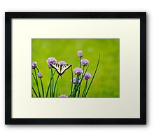 Sugar and Spice Butterfly Art Framed Print