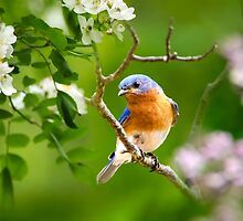 Beautiful Bluebird by Christina Rollo