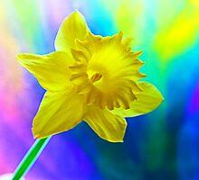Daffodil Flower by fantasytripp