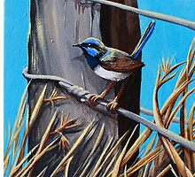 Blue wren by TwoShoes