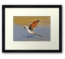 Blur of Flight - Namaqua Dove - African Wildlife Framed Print