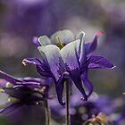 Macro Photo of a Purple Flower by Pixie Copley LRPS