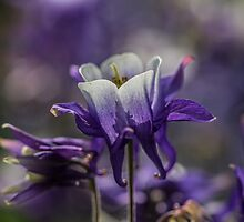 Macro Photo of a Purple Flower by Pixie Copley LRPS