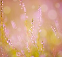 pink heather macro and blurred background  by Arletta Cwalina