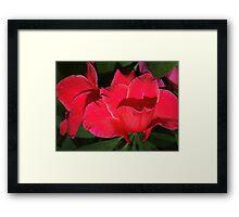 Velvety red lilies Framed Print