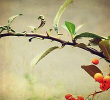 Autumn Feel with Branch by elenor27