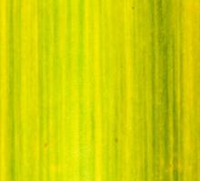 Macro shot of green bamboo texture, nature backgroud Sticker
