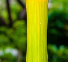 Macro shot of green bamboo texture, nature backgroud by Stanciuc