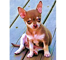 Coco,.....So Serious ! Photographic Print