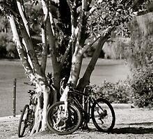 Anyone for a bike ride?  by Margaret Stanton