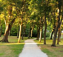 The Path through the Trees - Royan, France. by Tiffany Lenoir