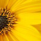 Big Yellow Daisy  by sarnia2