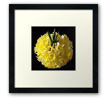 Daffodils ball Framed Print