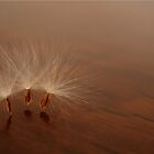 Dancing Dandelions... (Free State, South Africa, Wild Flower) by Qnita