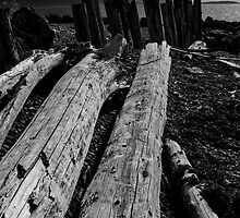 Driftwood Logs in Black and White by Timothy  Snyder
