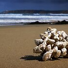 Sponge Beach,Hutt Gully,Great Ocean Road by Darryl Fowler
