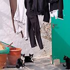Trousers & Cats by Francis Drake
