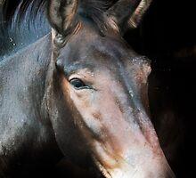 Single Horse by Krystal Easter