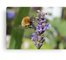 Flying Bumble Bee Canvas Print