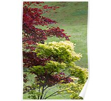 tree in the garden Poster