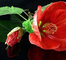 Red Chinese Lantern by Tom Newman