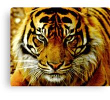 Sumatran Tiger III Canvas Print