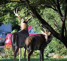 Suburban Bucks by Sheryl Hopkins