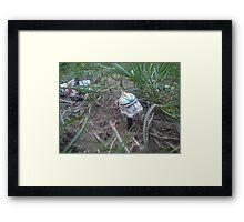 Down and out 3 Framed Print