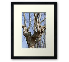tree in the park Framed Print