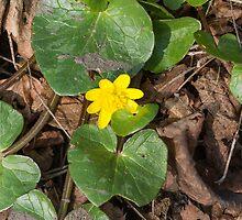 yellow primroses by spetenfia