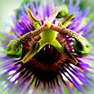 Passion Flower by ©The Creative  Minds
