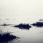 Fog over the river by Lenoirrr
