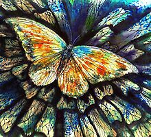 'Ephermeral Life' Butterfly by Rebecca Yoxall