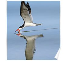 Black skimmer with reflction Poster