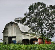 Old Gray Barn by Nadya Johnson