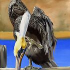 What Pelicans Do (3) by Phyllis Beiser