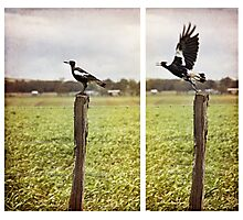 what then is freedom? Photographic Print