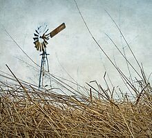 Mill on the Downs by scottimages