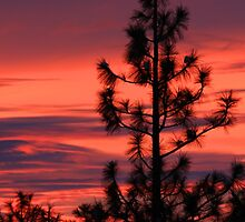 Pine Tree Sunrise by James Eddy