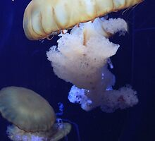 Jellyfish by mrspleza