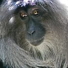 Lion-tailed Macaque by Margaret Saheed