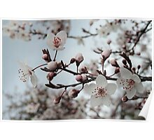 Spring Blossoms #3  Poster