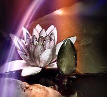 Rainbow lily by DerekEntwistle