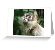 Enchanting Young Spider Monkey Greeting Card