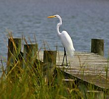 Egret on a Pier by Gilda Axelrod
