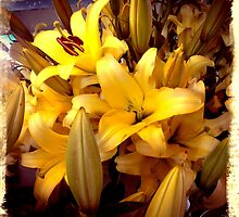 Yellow Lily's  by willowezra