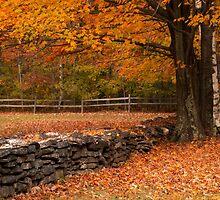 Serene Autumn by Jigsawman